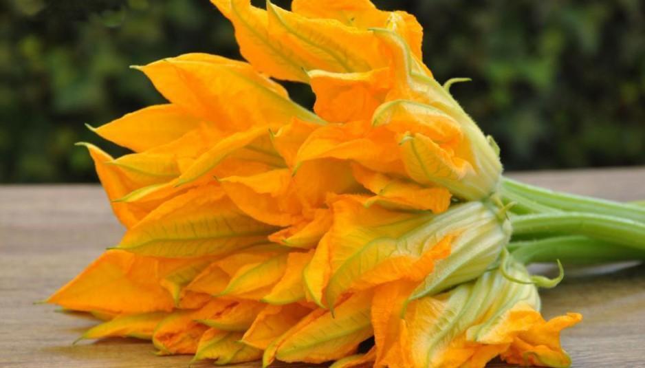 fioridizucca