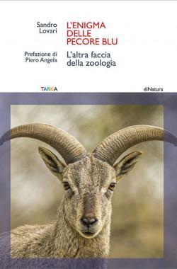 copertina enigma pecore blu